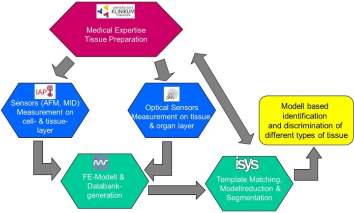 Figure 1: Flowchart diagram, top to bottom: UKT provides samples and medical expertise; IAP performs measurement on microscopic scale using atomic force microscopy (AFM) and microindenter (MID); ITO performs measurement on macroscopic scale employing full field optical sensors in combination with a roll indenter; based on the data obtained by IAP and ITO; IMWF generates the FE-Modell and multiple different scenarios after a good match has been obtained; ISYS vision is to simplify the highly complex and time consuming FE-Modell and to perform segmentation, as to enable to enable the application in operational environment.